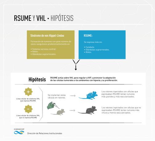 Resume y VHL - Hipótesis